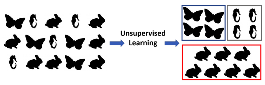 Drawings of a collection of butterflies, seahorses, and rabbits that are then categorized by species using unsupervised learning.